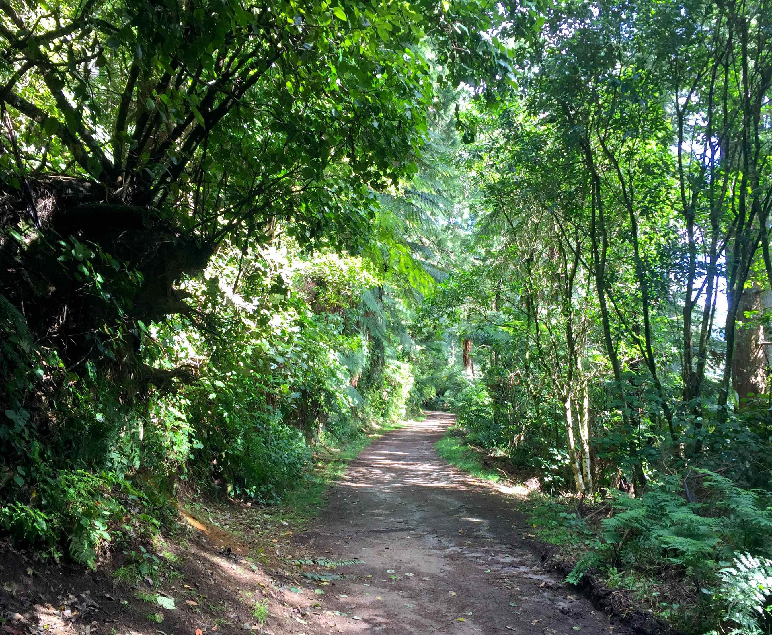 緑のトンネル。道は平坦で歩きやすい