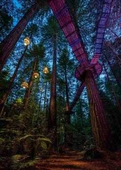 RedwoodsNight