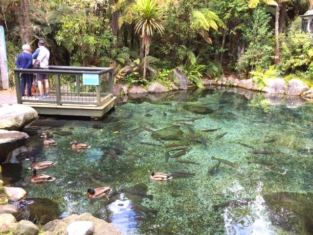ニジマス池