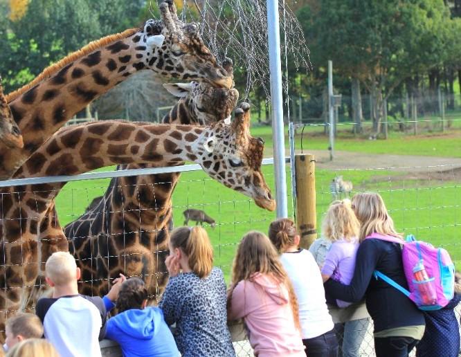 ハミルトン動物園