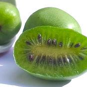 kiwiberry.jpg