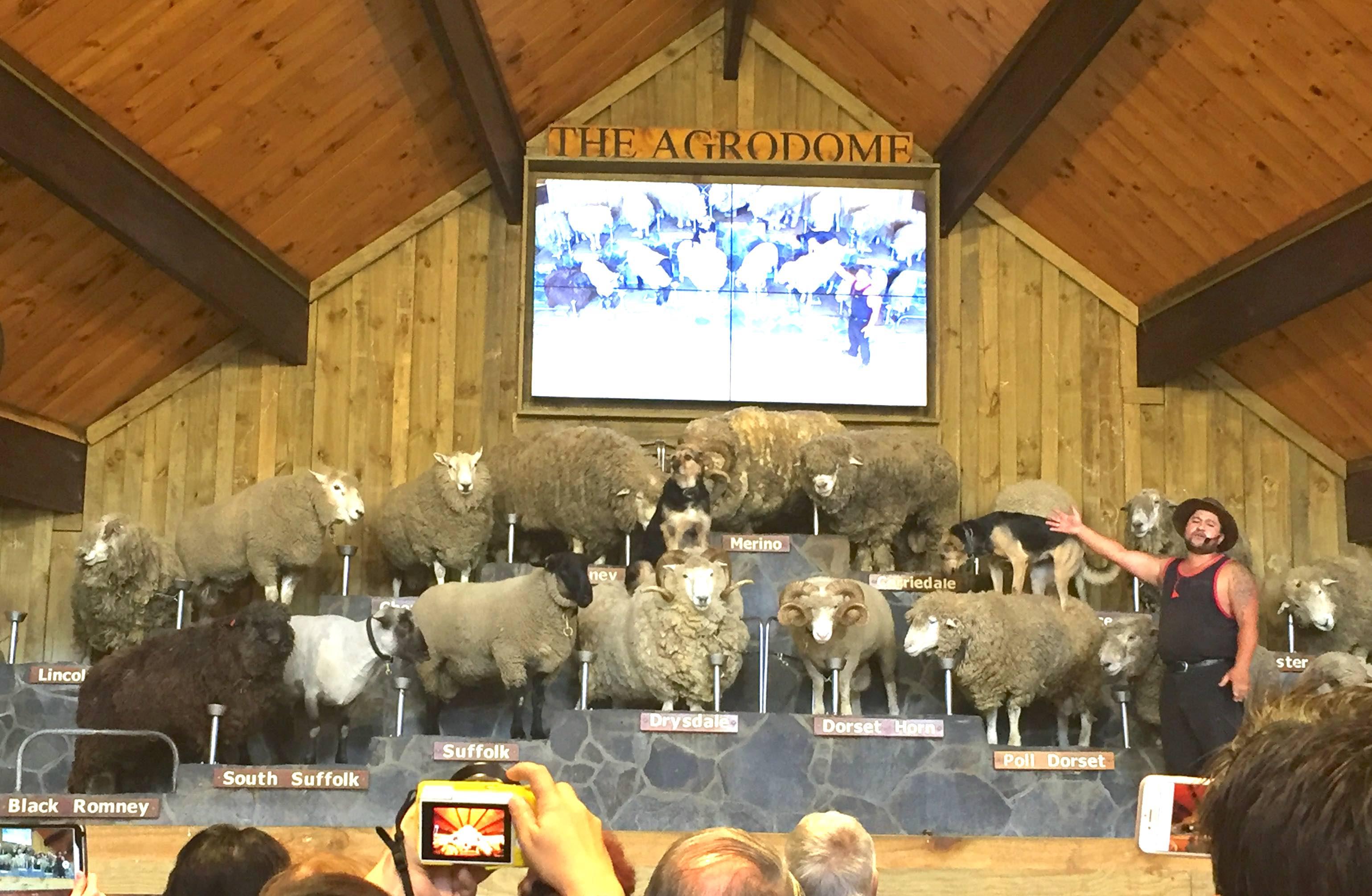 様々な種類の羊たち