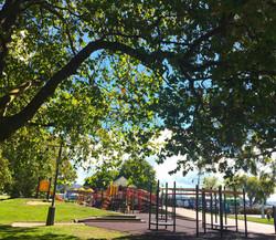 日差しが強い時は木陰で一休み