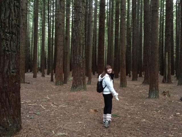 レッドウッズ  森林浴