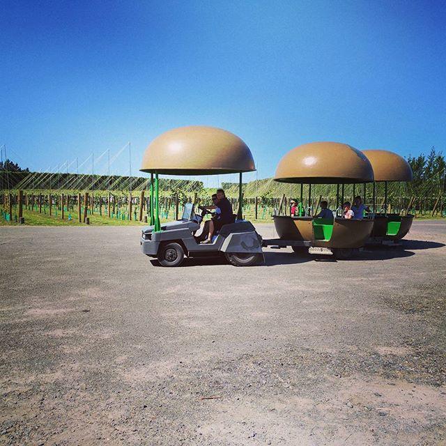 キウイの形をした観光連結車