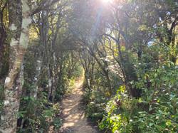 在来植物が生い茂る山道
