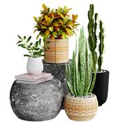 Realistic Interior Plants In Pots + Books Decorations