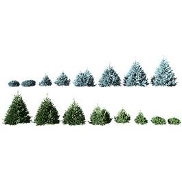 Picea 2 Colors