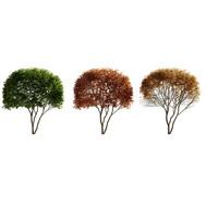 Amelanchier Tree - Shadbush, Shadwood, S