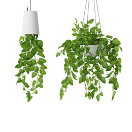 Hanging Plants - Set Of 2 Plants In Pots