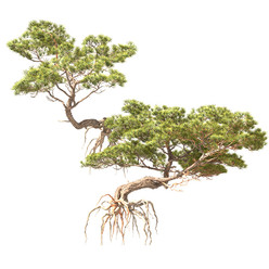 Pine On Rock 01 (Set Of 2 Small Trees).j