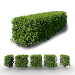 Buxus Hedge (Set Of 5 Pieces)