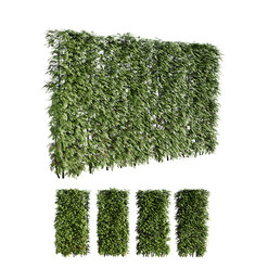 Thuja Hedge (2.1m) Set Of 4 Pieces