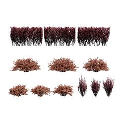 Berberis Thunbergii Set Of Hedges