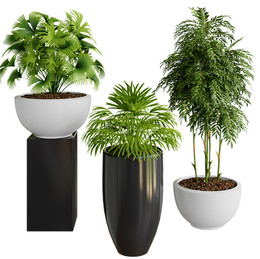 Collection Of 3 Plants In Pot