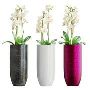 Orchid (3 Pieces Set)