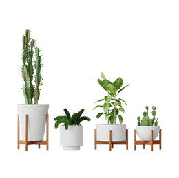 Plants 98 Cactuses (Set Of 4 Plants In P