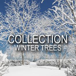c winter trees.jpg