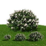 Rose Bush (Set Of 3 + Grass)