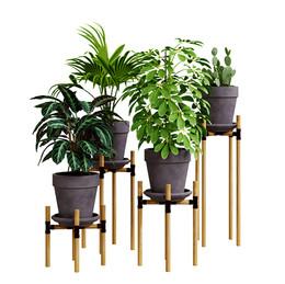 Realistic Interior Plants In Pots