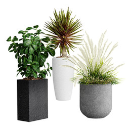 Realistic Interior Plants In Pots (3 Species - Decorative Grass, Ficus, Agave)