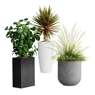 Realistic Interior Plants In Pots (3 Species - Decorative Grass, Ficus, Agave)