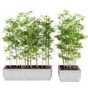 Interior Plants - Bamboo