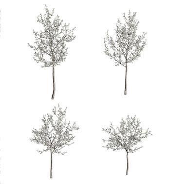Cherry-Tree_flowering(Cerasus) set of 4