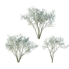 Tree - Amelanchier Flowering 02 Tree In 3 Variations.jpg