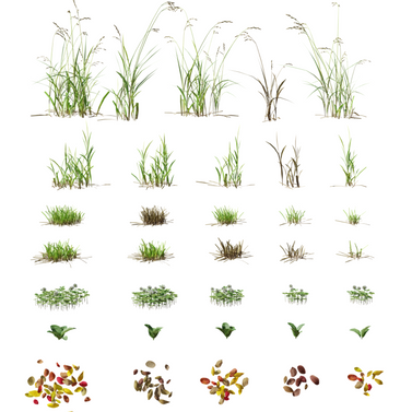 Set For Landscaping - 6 Types Of Grass F