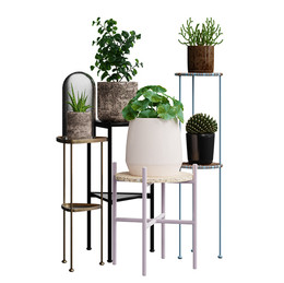 Realistic Interior Plants In Pots (5 Species)