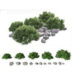 Mountain Pine With Rocks