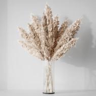 Pampas Grass - Dried Flower