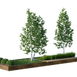 Tree - Set Of Green Benches With Trees And Shrubs