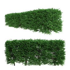 Buxus Sempervirens Hedge