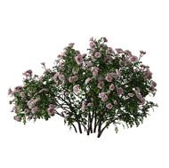 Rose Bush (Consist Of 3 Pieces)