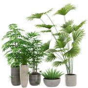 Interior Plants - Set Of 5