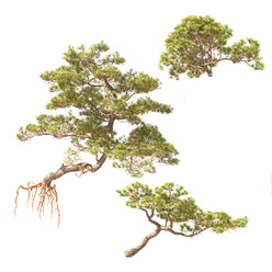 Pine On Rock 02 (Set Of 3 Small Trees)