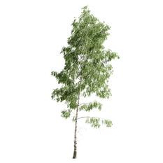 Birch_forest_part_05(24m)