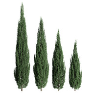 Juniperus_scopulorum_02 set of 4.j