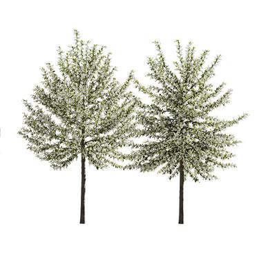 Prunus Padus 03.jpg