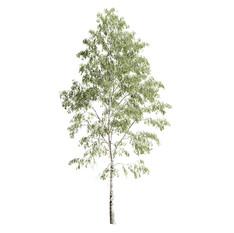 Birch_forest_part_03(24.3m)