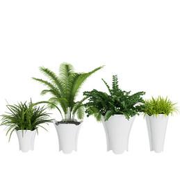 Interior Plants - Set Of 4