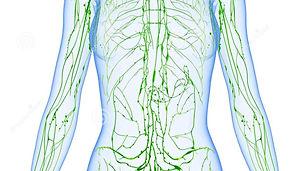 female-lymphatic-system-half-body-anatomy-illustration-male-36218746_edited_edited_edited.jpg