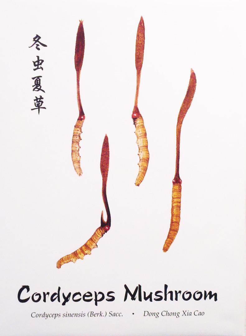 cordyceps.jpg