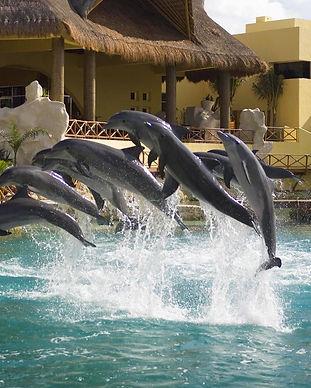 exclusive-dolphin-swim-vip-experience-30