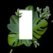 leaves27(blankbg).png