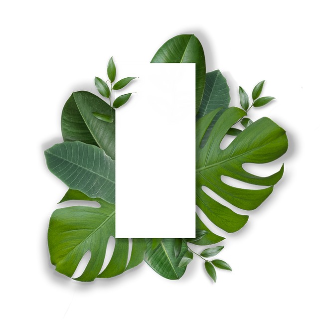 leaves27(blankbg).png