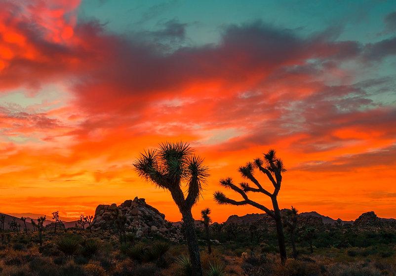 Wadell_Desert.jpg