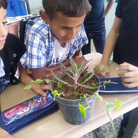 الصف الرابع - التعرف على النباتات وكيفية تكاثرها